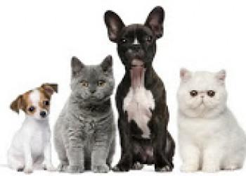 Entre perros y gatos y más